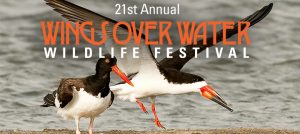 Outer Banks wildlife festival - Wings Over Water