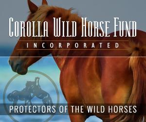 Corolla Wild Horse Fund 300×250
