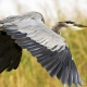 Outer Banks wildlife festival - Wings Over Water - birds - waterfowl - photographers