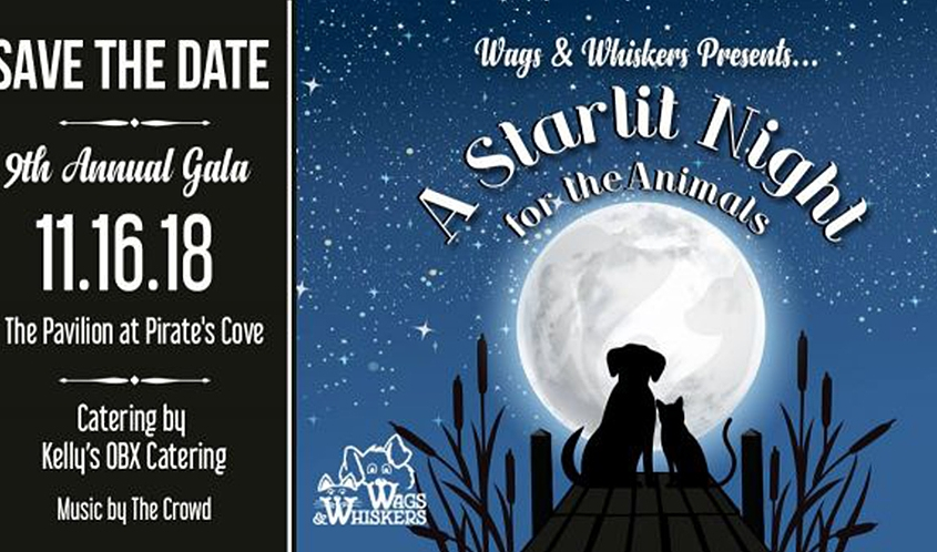 Outer Banks events - November - SPCA - Coastal Humane Society - Feline Hope - Friends of Felines